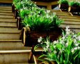 Planted Wooden Barrels on Stairway