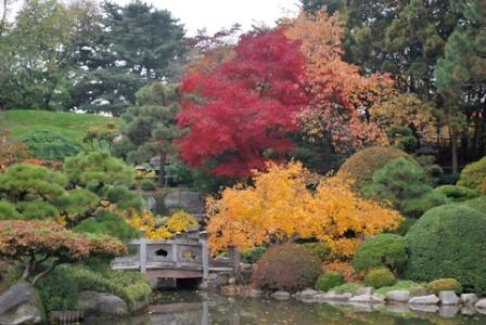 japanese maple photo demonstrating color values