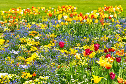 Color and Mood Design the Garden You Really Want
