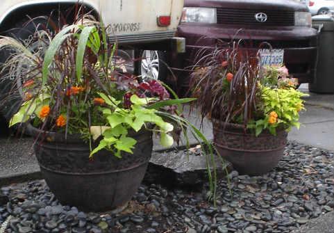 Designing a Container Garden