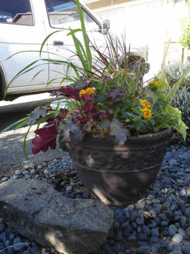 Newly Planted Container