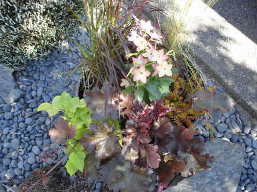planting container gardens