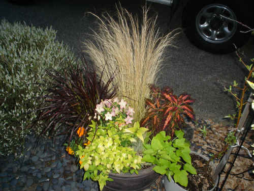 dramatic container garden
