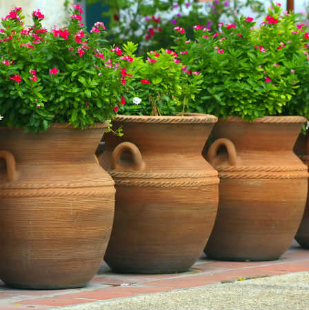 beautifully planted clay pot