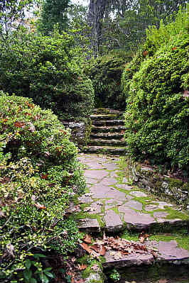 a woodland path withgarden stairs