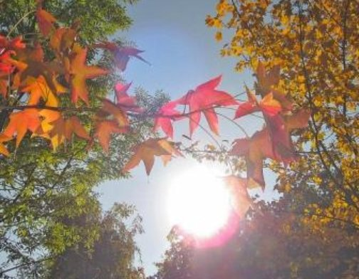 sunlight through the fall leaves