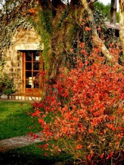 firey orange fall leaves