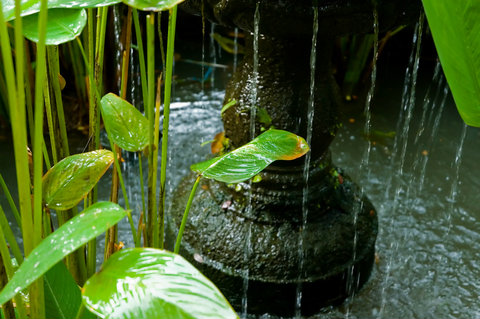 Bird Bath in a Garden Pon