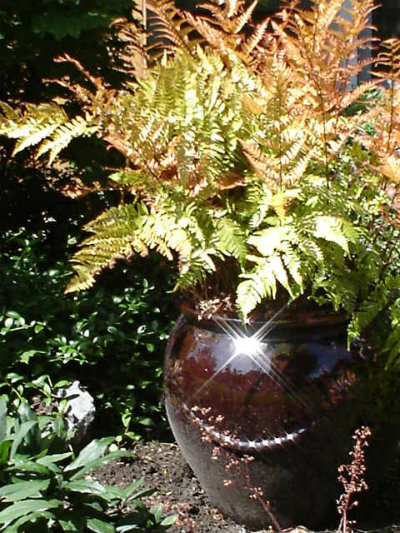 Fern in Beautiful Brown Enameled Pot