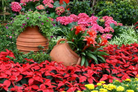 Clay Pots nestled in groundcovers