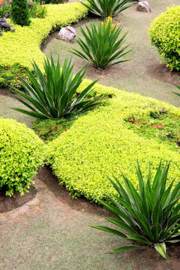 Planning A Garden Border How To Achieve The Wow Factor