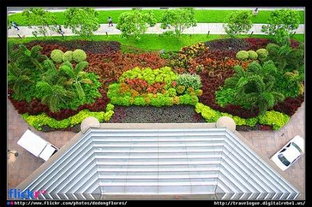 bilateral symmetry demonstrated in a garden