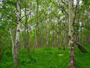 a grove of birch trees
