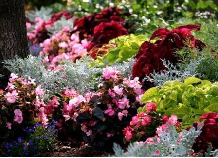 colorful annual garden demonstrating good visual texture