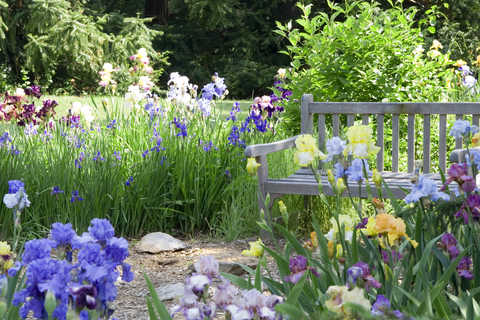 Garden Bench in Country Garden