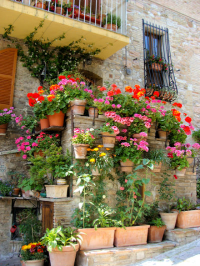 Brightly Planted Terra Cotta Pots adorning a Wall