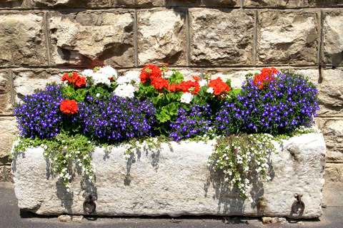 Stone Trough with Lobelia and Geraniums