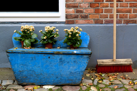 Violets in a Blue Wooden Container