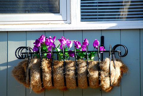 Bent Metal Window Box with Tulips