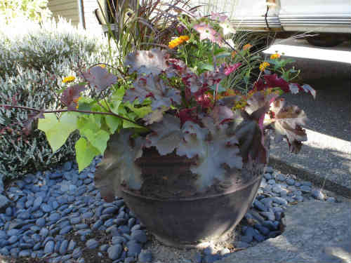 Container Garden with dramatic contrasts