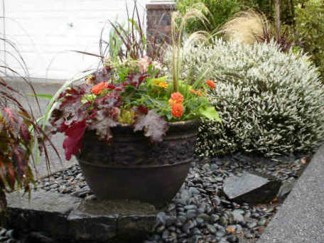 Container Garden Picture