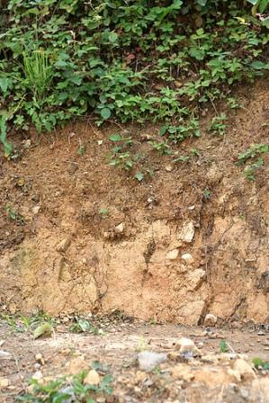 heavy clay soil picture