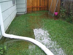 standing water can kill the grass