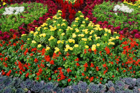 a garden border with annuals arranged in an exciting patter