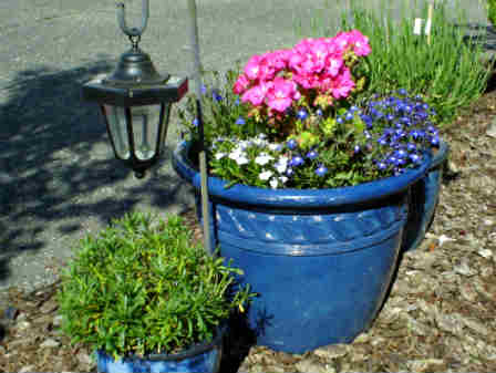 bold blue garden container used as an accent