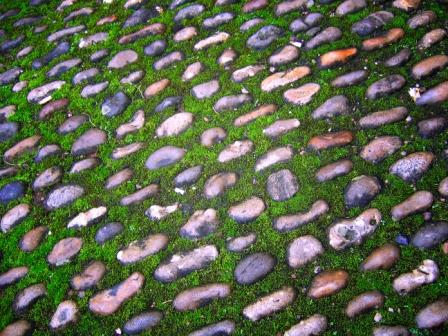 moss garden using rhythm and motion principles