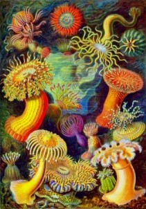 radial symmetry in a painting by Ernest Haeckel