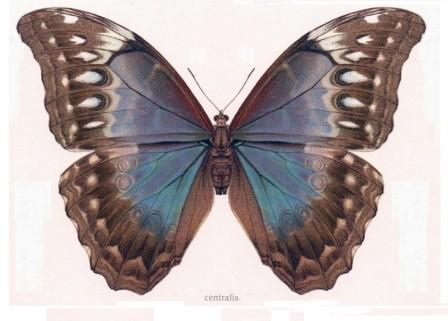 butterflies an an example of bilateral symmetry in nature