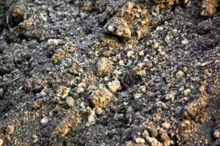 example of sandy soil