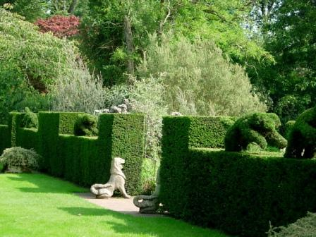 symmetrical garden hedge