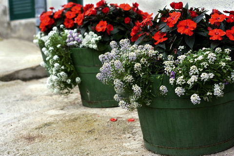 Impatiens and Alyssum in Half Barrel